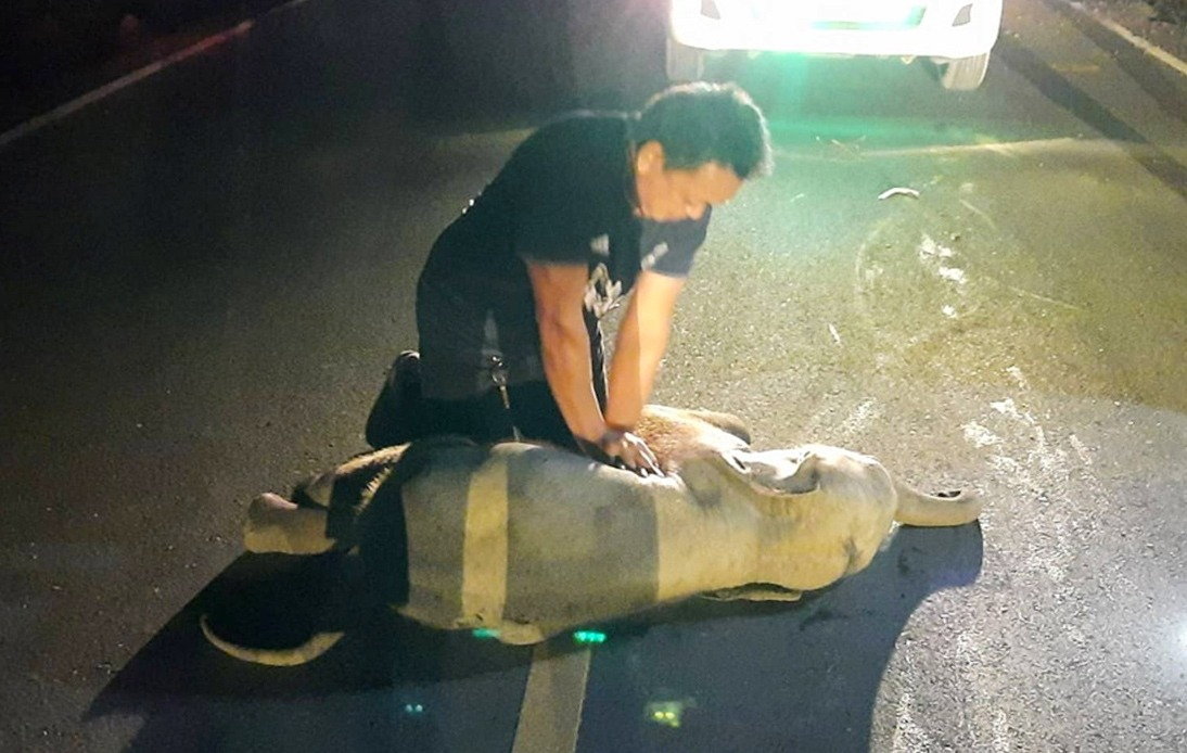 Thai Man Revives Baby Elephant With CPR After Accident