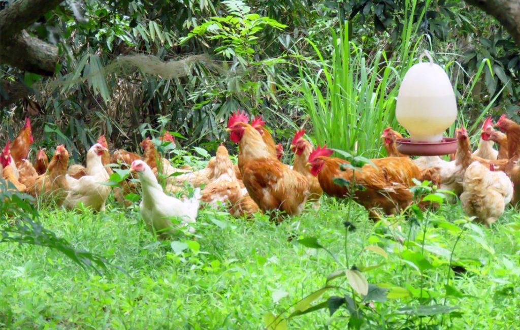 Klong Phai Farm's Delicious Selection of Free-Range Foods