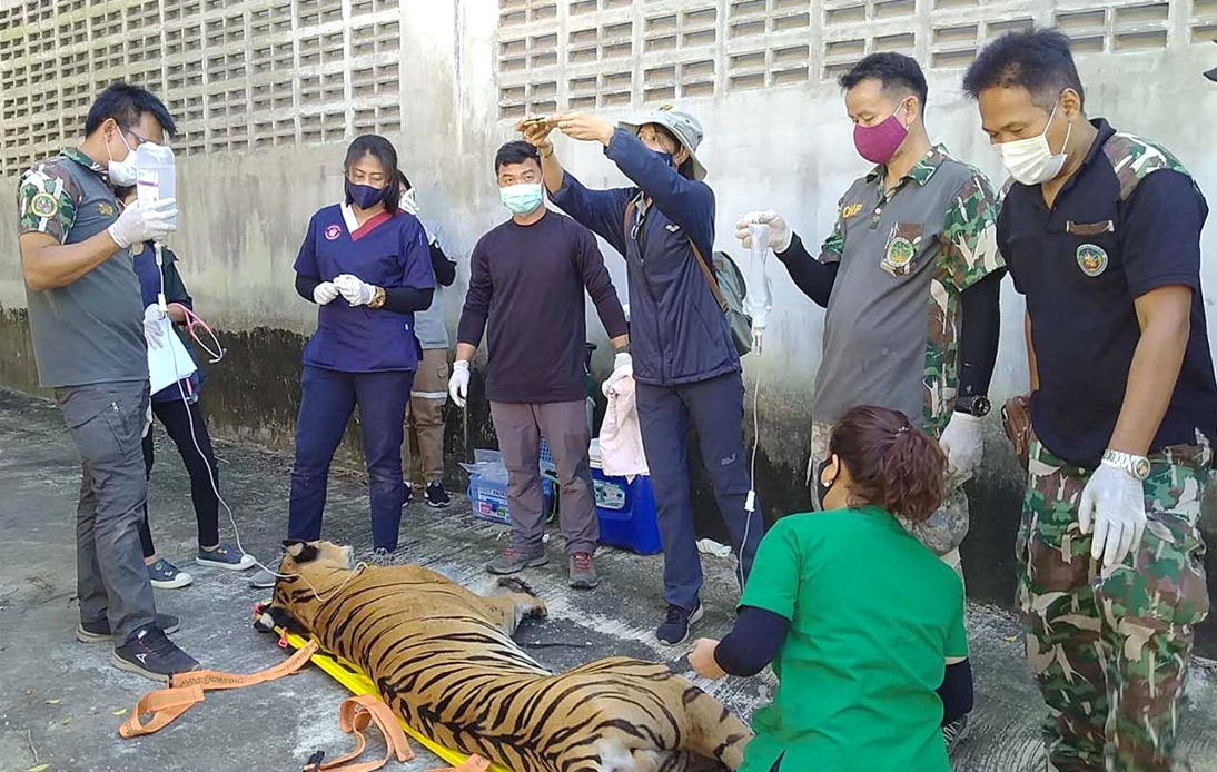 DNP Withdraws the License of Mukda Tiger Park and Farm