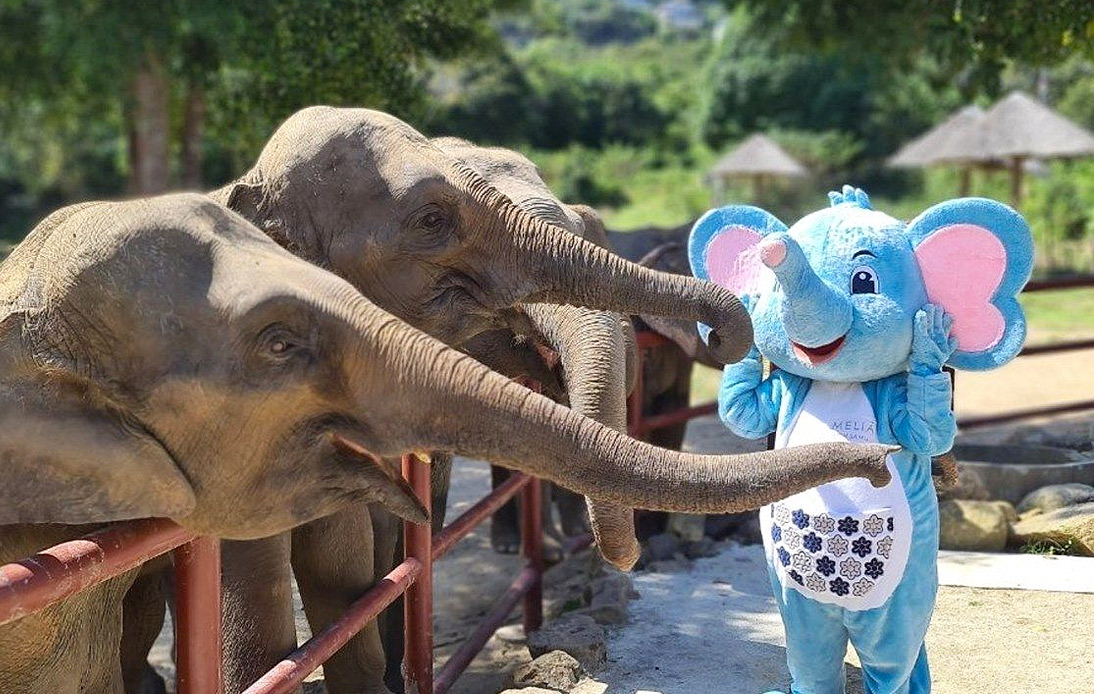 Meliá Koh Samui Resort Rescues Twenty One Elephants
