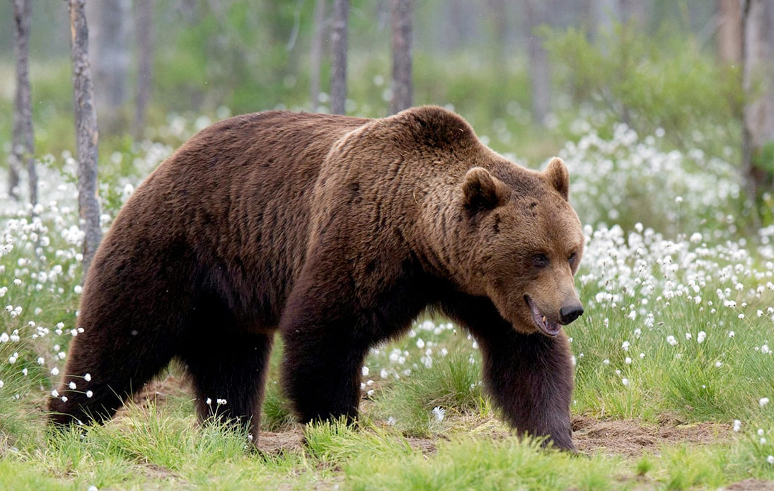 Russian Politician Shoots Man After Mistaking Him for Bear