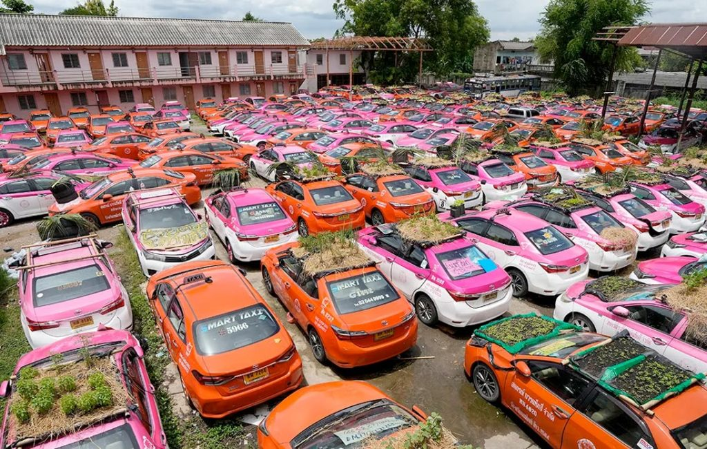 Bangkok's Idle Taxis Used To Set Up Mini Rooftop Gardens