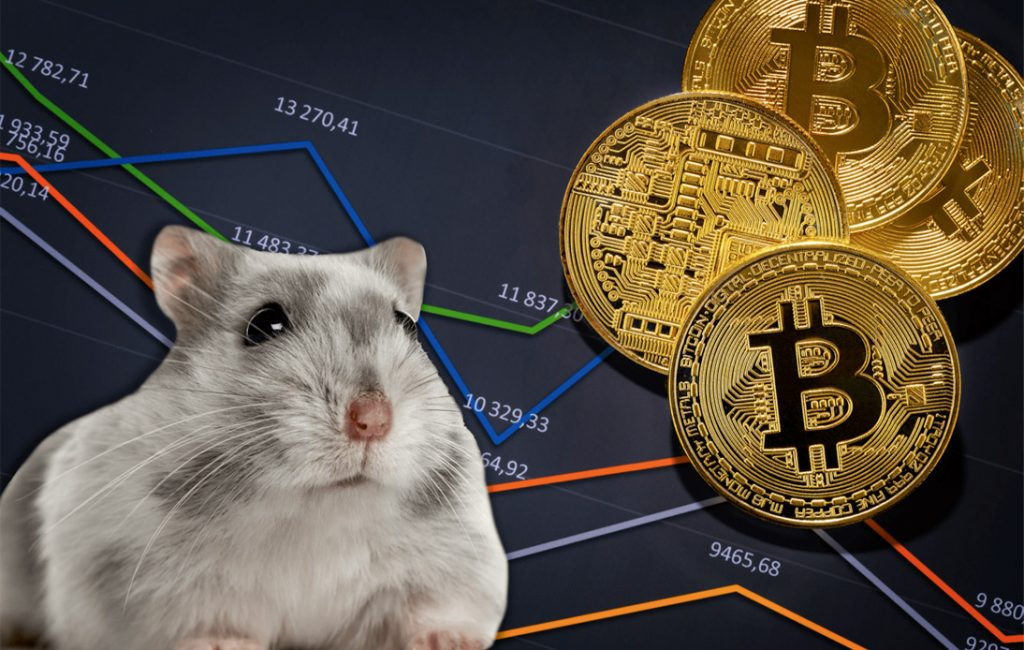 Mr. Goxx: Crypto-Trading Hamster Outperforms Human Investors